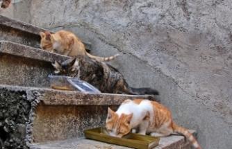 Emekli maaşıyla mahalledeki sokak kedilerine bakıyor