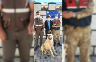 Kars'ta ayı yavrusuna köpeklerini saldırtan kişiye para cezası
