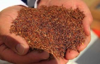Sertifikalı Tohum' İhracatı İçin 2023'te 320 Milyon Dolar Hedeflendi