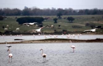 Gala Gölü'nde kaçak avcılıkla mücadele artırılacak