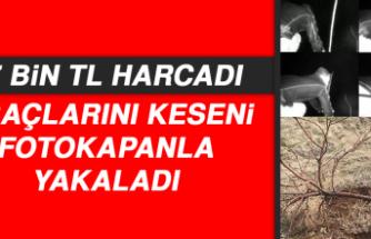 17 bin TL Harcadı, Ağaçlarını Keseni Fotokapanla Yakaladı