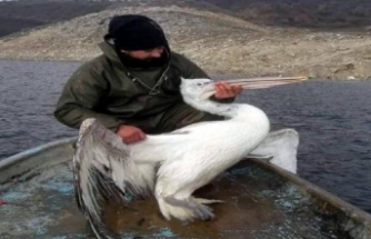 Baraj gölünde ağa takılan pelikan kurtarıldı