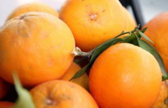 Gıda İhracatının İlk Kez 20 Milyar Doları Aşması Bekleniyor