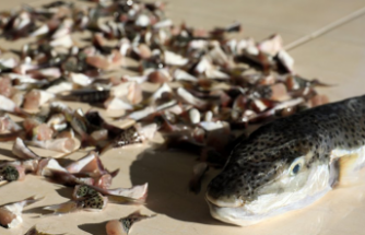 Üretici Ve Balıkçılara, 140 Milyon Liralık Destek Ödemesi Bugün Başlıyor