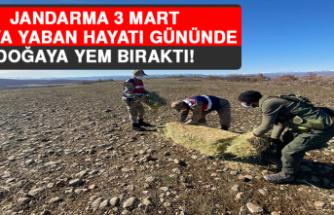 Jandarma, 3 Mart Dünya Yaban Hayatı Gününde Doğaya Yem Bıraktı