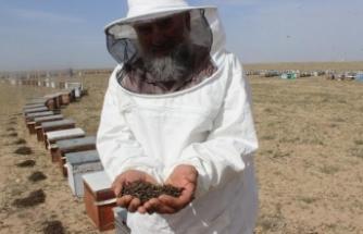 Bilinçsiz ilaçlama nedeniyle 750 kovandaki arılar telef oldu