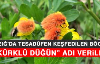 """Elazığ'da Tesadüfen Keşfedilen Böceğe """"Kürklü Düğün"""" Adı Verildi"""