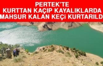 Pertek'te Kurttan Kaçıp Kayalıklarda Mahsur Kalan Keçi Kurtarıldı