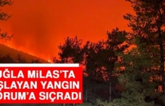 Muğla Milas'ta Başlayan Yangın Bodrum'a Sıçradı