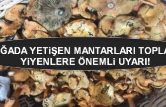 Doğada yetişen mantarları toplayıp yiyenlere önemli uyarı!