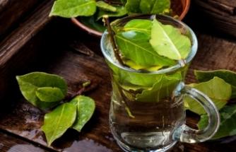 Defne yaprağı tüketmenin vücuda sağladığı 9 önemli etki