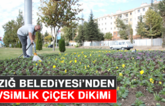 Elazığ Belediyesi'nden Mevsimlik Çiçek Dikimi