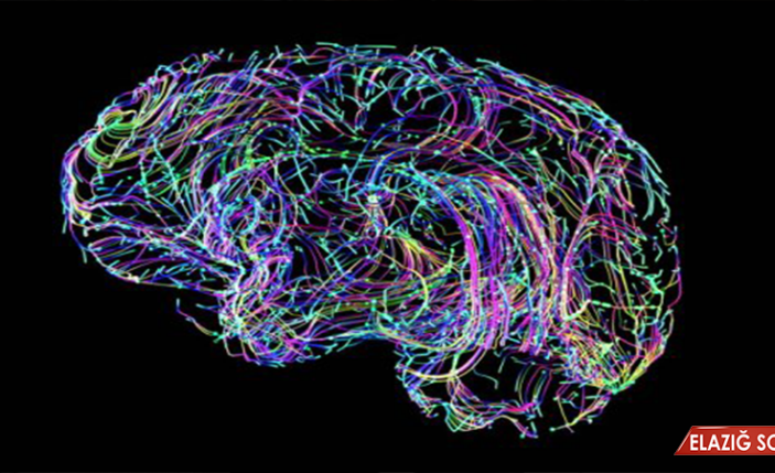 Bilim insanları, çay içmenin beyin gücünü artırdığını keşfetti